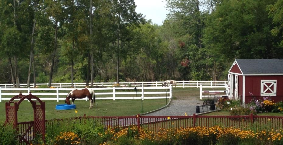 horse pasture pool