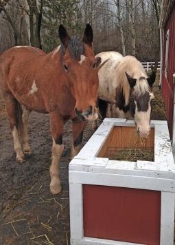 Bailey Cheyenne feeder box