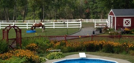 horse in pastures