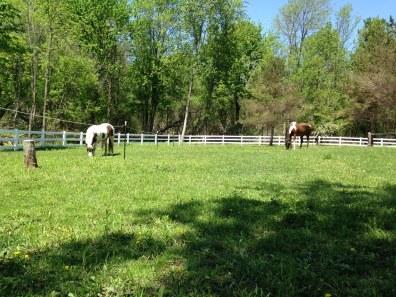 Pasture 2015 photo